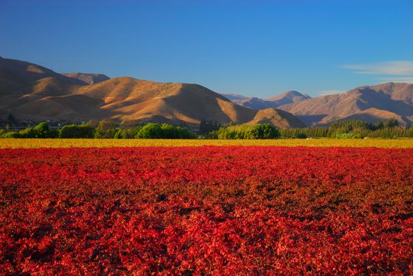 Tiempo en Argentina: primavera en el Valle del Elqui